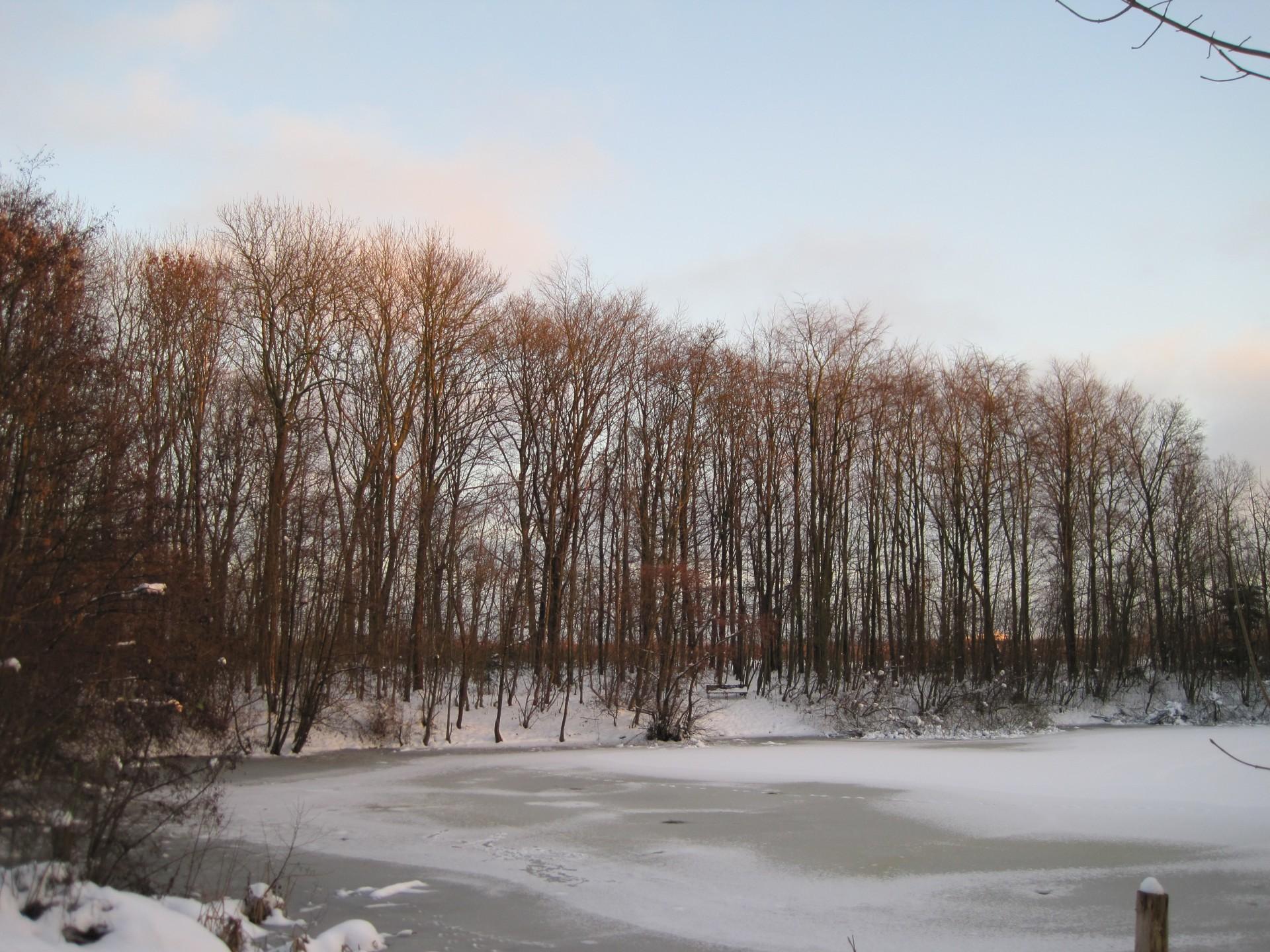 001 Vinter skov